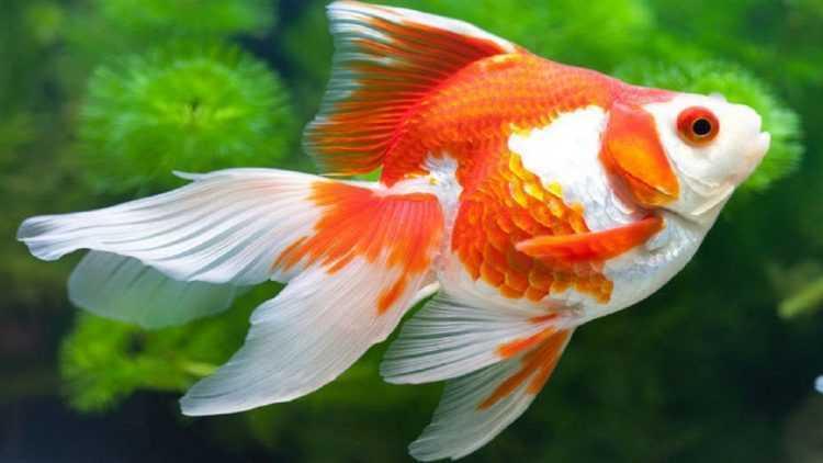 Nằm mơ thấy cá có ý nghĩa gì? Giải mã giấc mơ thấy cá là điềm gì?